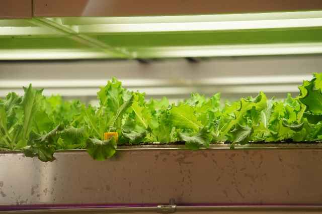 植物工場研究開発「みらい」